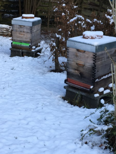 hornissennester im winter entfernen
